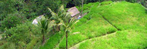 Standortreise Yogyakarta © B&N Tourismus