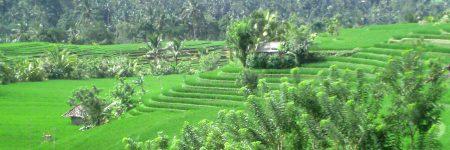 Indonesien Suche © B&N Tourismus